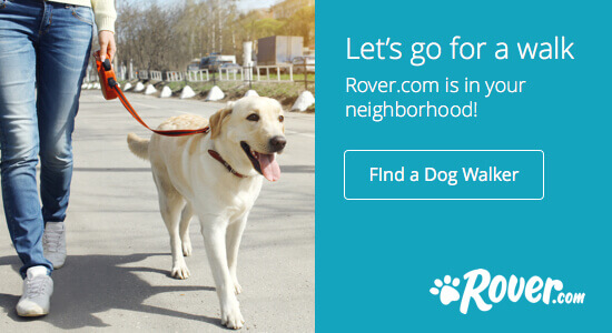 Rover dog walking service